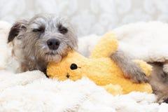 与被充塞的熊的困狗 免版税库存图片