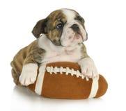与被充塞的玩具的逗人喜爱的小狗 库存照片
