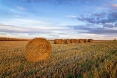与被剪的草的秋天全景农村领域在日落 免版税库存图片
