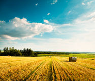 与被割的麦田和云彩的夏天风景 免版税图库摄影