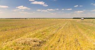 与被割的麦田的风景与干草堆 库存图片
