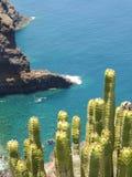与被弄脏的海洋的绿色仙人掌在背景中 库存图片
