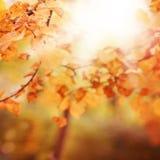 与被弄脏的秋天金黄叶子的秋天背景 库存图片