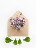 与被打开的工艺纸信封的卡片用春天开花紫色淡紫色花和少量放置在白色backgrou的绿色叶子填装了 免版税库存图片