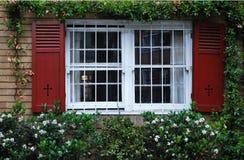 与被打开的快门的一个窗口在常春藤墙壁上 库存照片