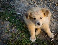 与被折叠的耳朵的一条哀伤街道狗看照相机 免版税库存图片