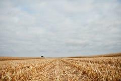 与被收获的玉米残余的亩茬地  免版税库存照片