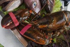 与被束缚的爪的新鲜的活螃蟹 免版税图库摄影