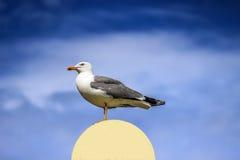 与被涂的翼的海鸥 免版税库存图片