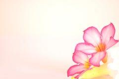 与被点燃的蜡烛的花卉背景 库存照片