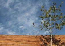 与被猛撞的地球墙壁物质纹理的树在天空backgro 免版税库存图片