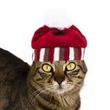 与被编织的镶边帽子的一只镶边猫有对照相机的绒球神色的 查出 图库摄影