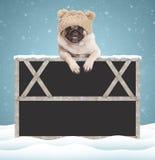 与被编织的帽子的可爱的逗人喜爱的哈巴狗小狗,垂悬与在空白的黑板标志的爪子与在蓝色背景的木制框架与 免版税库存照片