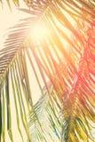 与被过滤的减速火箭的可可椰子树叶子  横跨叶子的太阳 库存照片
