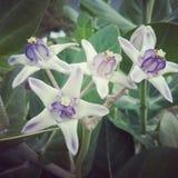 与被过滤的纹理作用的艺术花卉背景 库存图片