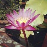 与被过滤的纹理作用的艺术花卉背景 库存照片