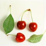 与被采摘的叶子的樱桃 库存图片