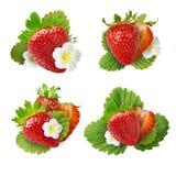 与被隔绝的绿色叶子的新鲜的水多的草莓 免版税图库摄影
