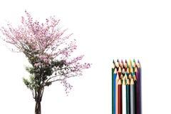 与被隔绝的颜色铅笔的环境概念性树花 免版税库存照片