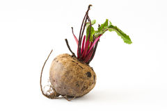 与被隔绝的叶子的甜菜根 免版税库存图片