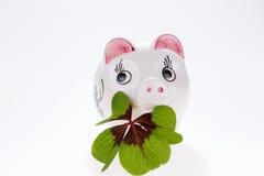 与被隔绝的四片叶子三叶草的幸运的魅力猪 库存图片