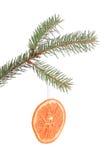 与被隔绝的干橙色切片的杉木分支 库存图片