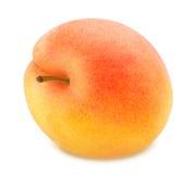 与被隔绝的词根的成熟橙色杏子 图库摄影