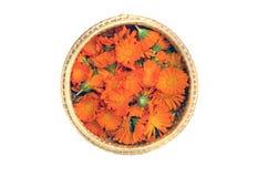 与被隔绝的金盏草万寿菊医疗花的柳条筐 免版税库存图片