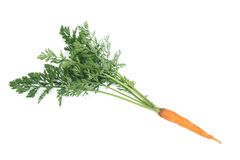 与被隔绝的绿色叶子的一棵年轻红萝卜 免版税库存照片