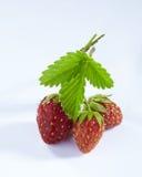与被隔绝的绿色叶子的新鲜的草莓 库存图片