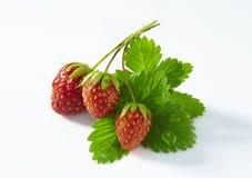 与被隔绝的绿色叶子的新鲜的草莓 免版税库存图片