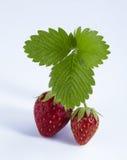 与被隔绝的绿色叶子的新鲜的草莓 图库摄影