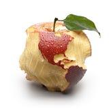 与被雕刻的大陆的Apple。 免版税库存照片