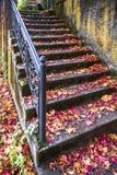 与被雕刻的栏杆的楼梯撒布与槭树红色秋叶  免版税库存照片
