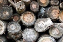 与被风化的神色的木日志背景 库存照片