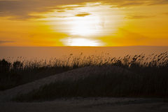 与被风吹芦苇的琥珀色的日落在沙丘 免版税库存图片