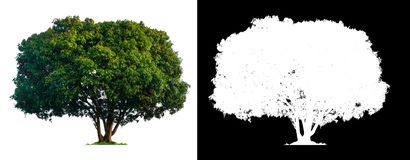 与裁减路线的唯一树 库存照片