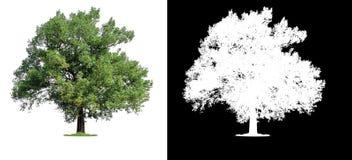 与裁减路线的唯一树 免版税库存照片