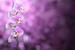 与裁减路线的紫色兰花花 图库摄影