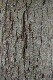 与裂缝的老木纹理 图库摄影