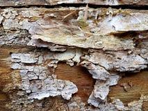 与裂缝的老树皮纹理 免版税库存照片