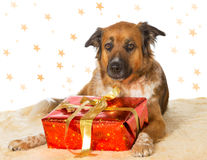 与装饰圣诞节礼品的狗 库存照片