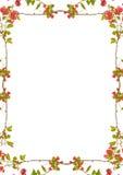 与装饰的花卉边界的白色框架 免版税库存图片