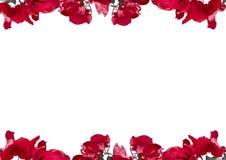 与装饰的花卉边界的白色框架 免版税库存照片