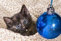 与装饰蓝色圣诞节中看不中用的物品的小的平纹小猫 免版税图库摄影
