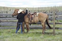 与西部马鞍的红色暗褐色短距离冲刺的马 库存图片