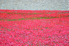 与要记住WWI - 2014年8月30的下落的战士的日红色鸦片海的伦敦塔-伦敦,英国 免版税库存图片