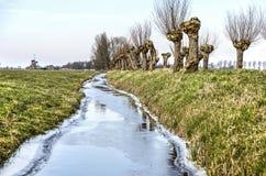 与角被割下的动物杨柳的冻垄沟 库存图片