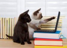 与计算机的暹罗和黑小猫 免版税库存照片