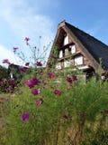 与议院的紫色花 免版税库存照片